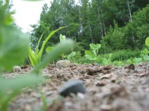 PlantView