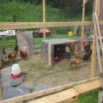 Pecking Order 2014